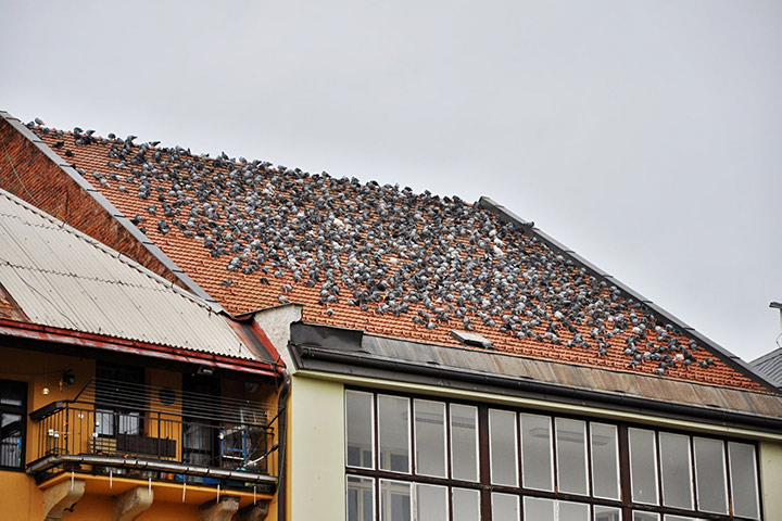 A2B Pest Control are able to install spikes to deter birds from roofs in Harlow.