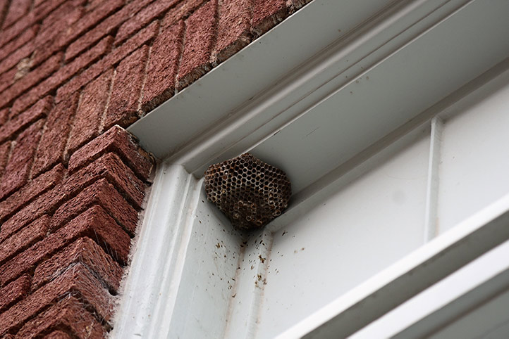We provide a wasp nest removal service for domestic and commercial properties in Harlow.